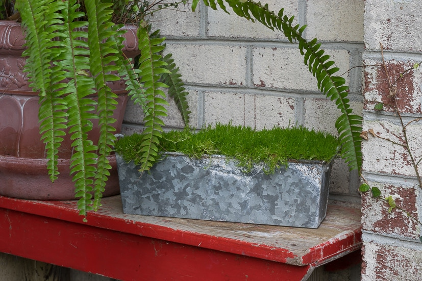 Spring Table Decor ideas: Using Scotch Moss in my home and porch decor