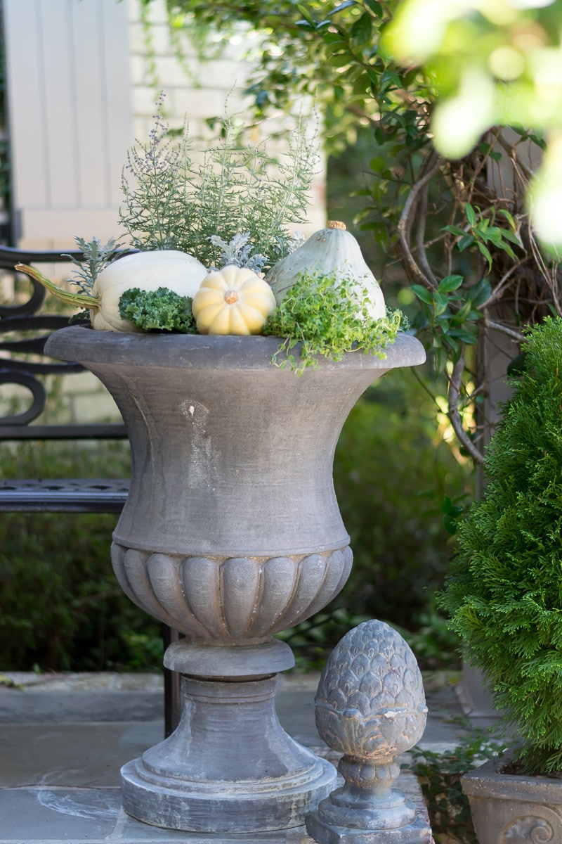 A fall container garden with natural and neutral elements anchored with hubbard squash, white acorn squash and white pumpkin. Thyme and kale are just a few of the plants that are tucked in to this autumn container garden in shades of gray, green and white.