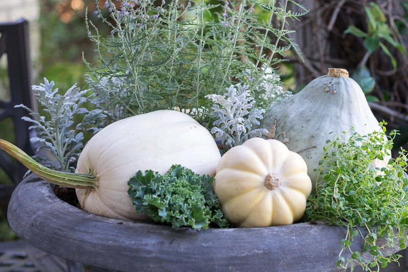 Soft, neutral and natural fall container garden