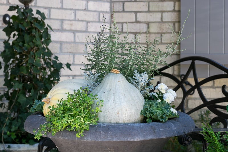 Lemon Thyme, Kale and Gourds anchor this Fall Container Garden.